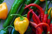 pepper-174x116.jpg