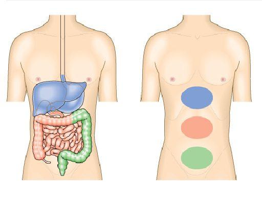 04451ed9fc8e3 أسباب و أنواع ألم المعدة أو وجع البطن و متى يجب استشارة الطبيب - كبسولة