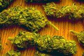marijuana-174x116.jpg