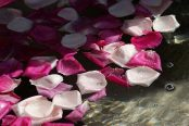 rose-water-174x116.jpg