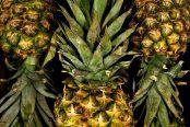 pineapple-174x116.jpg